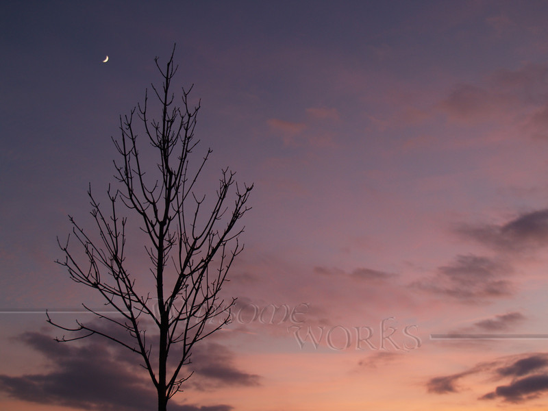Bare tree with winter crescent moon - Quakertown, PA
