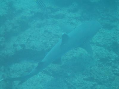 Galapagos & Ecuador - 2008 (by Prof. Fred Diehl)