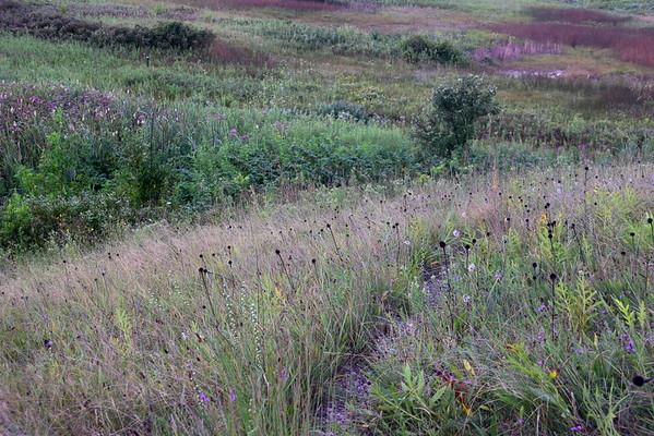 Nature Preserve landscapes