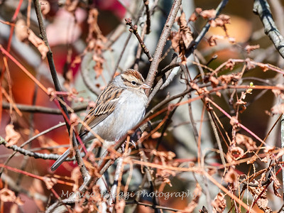 Maryland Area Birds, Variety, in 2019