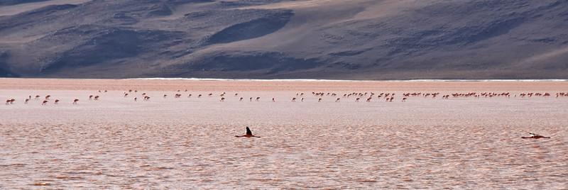 BOL_2504-Red Lake-Famingos.jpg