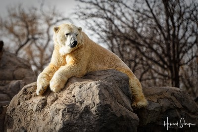 Trip to ABQ Zoo - Jan 20, 2019