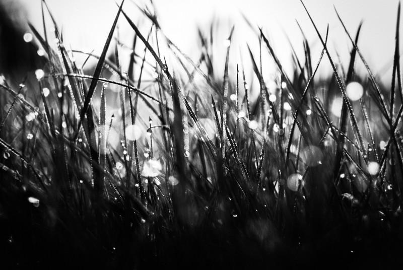 25 365 grass.jpg