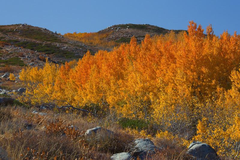 oct 19 - fall colors.jpg