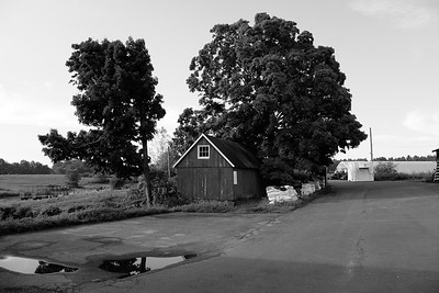 Tulmeadow Farm_Aug. 14, 2016_Monochrome