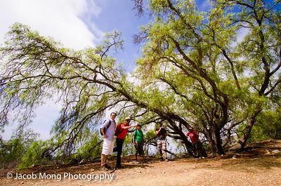 Hiking at Palos Verdes (Del Cerro Park):  August 22, 2015
