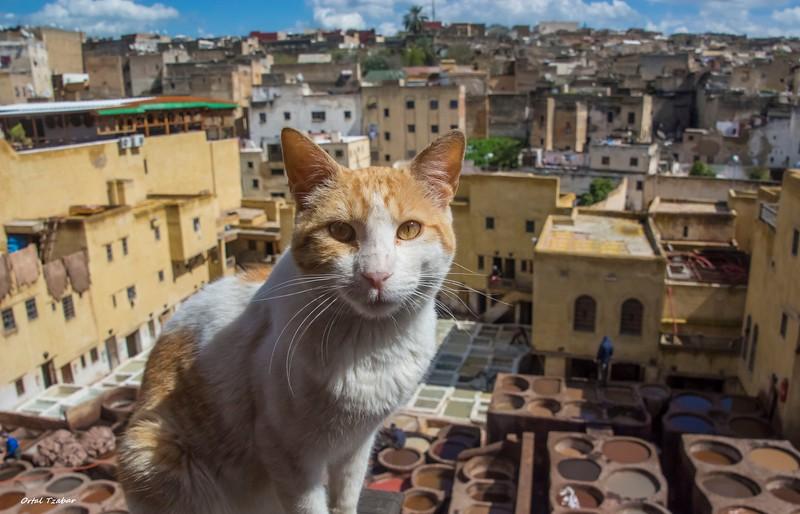 צביעת עורות עם החתול 3.jpg