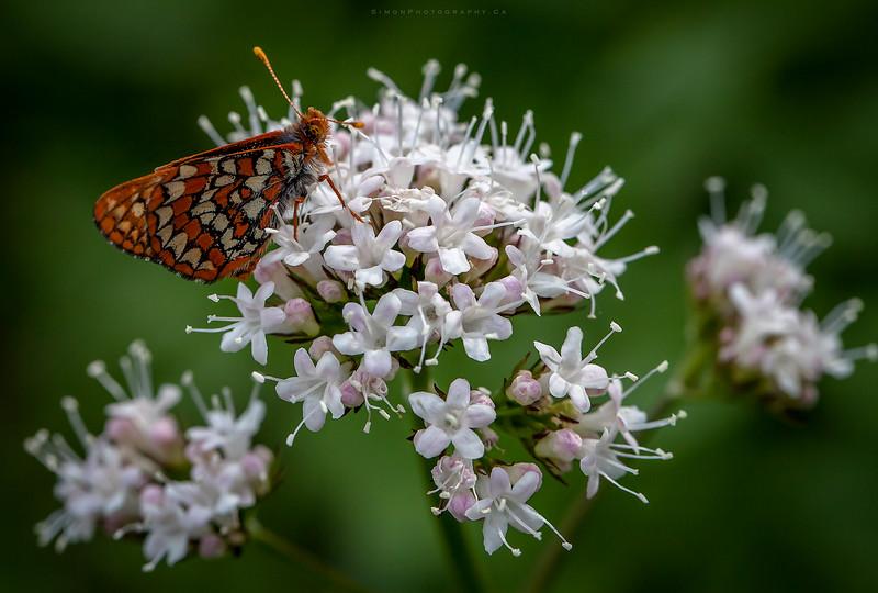 butterflymacro.jpg