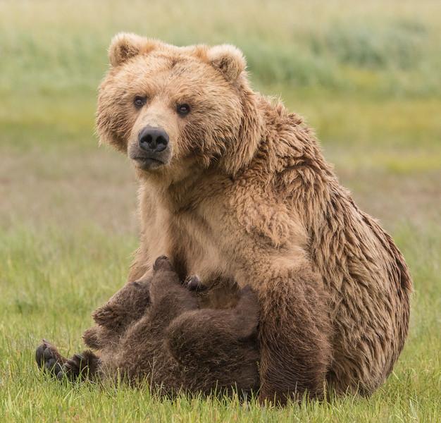 alaska-bears-17.jpg