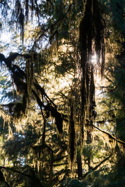 19-12-31 redwoods 0012-321.jpg