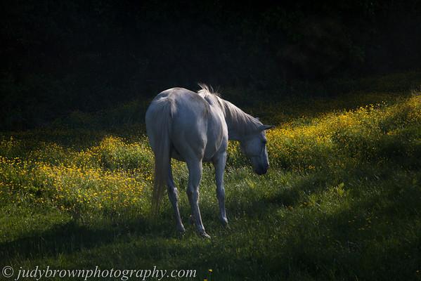 Winona Farm - more springtime splendor