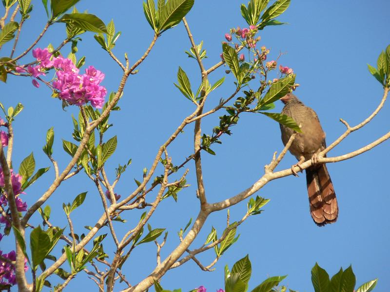 Pantanal_159.JPG
