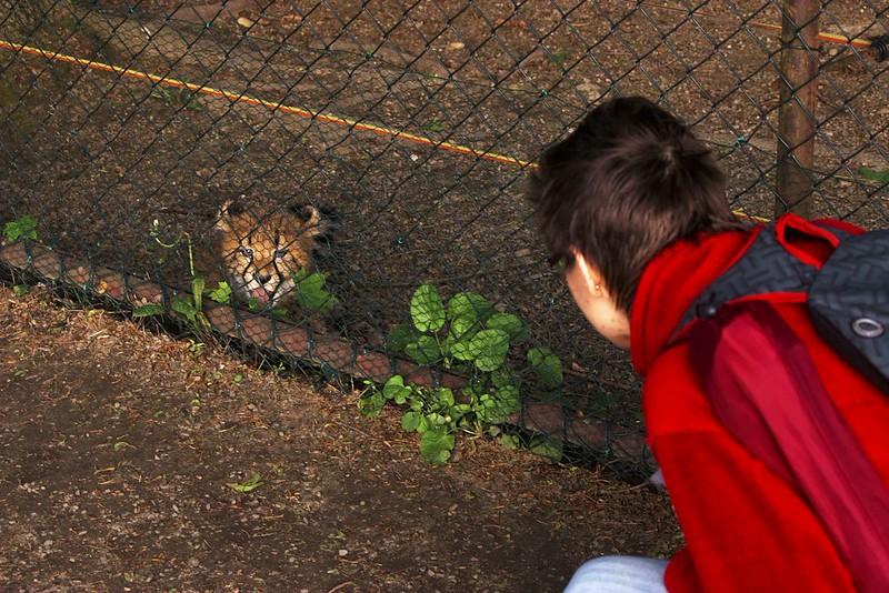 Co si o naší přítomnosti malý gepard myslí je asi evidentní... ;)