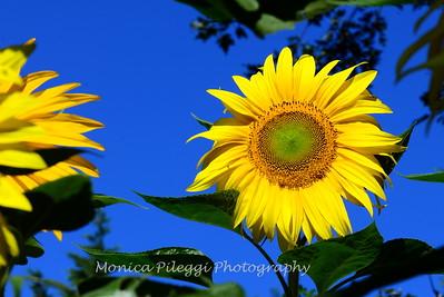 Summer Flowers 2014