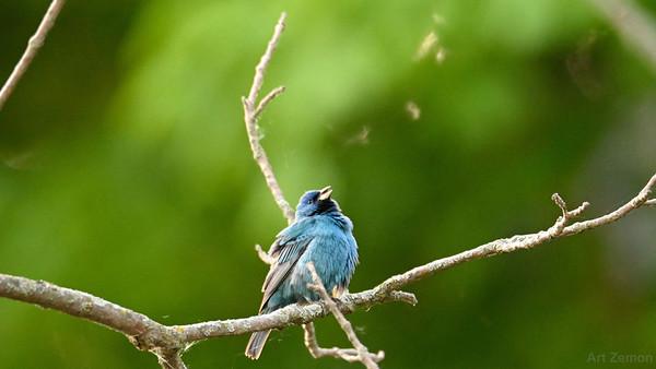 Wild Birds 2021-05-12