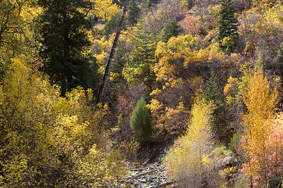 Fall In The Wasatch Front
