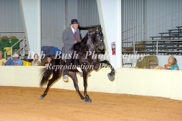 CLASS 15 Racking- Gaited Performance 3 & 4 yr old Open (Padded Action Device)