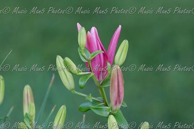 2009 - Flowers of Illinois