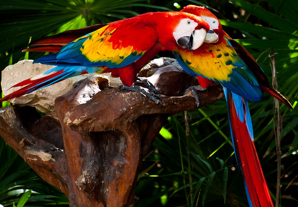 Colorful Friends