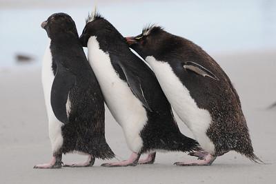 Falkland Islands 2010