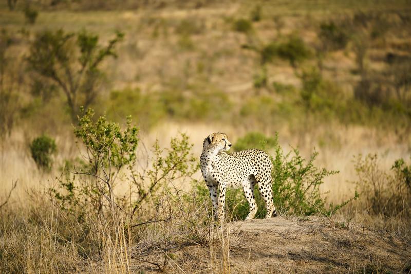 LeopardHills-20171022-0274.jpg