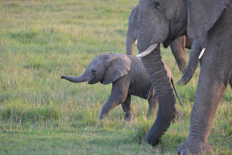 East Africa Safari 178.jpg