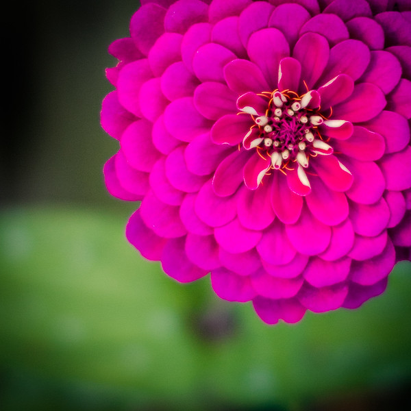 Bright Pink Flower nwm-.jpg