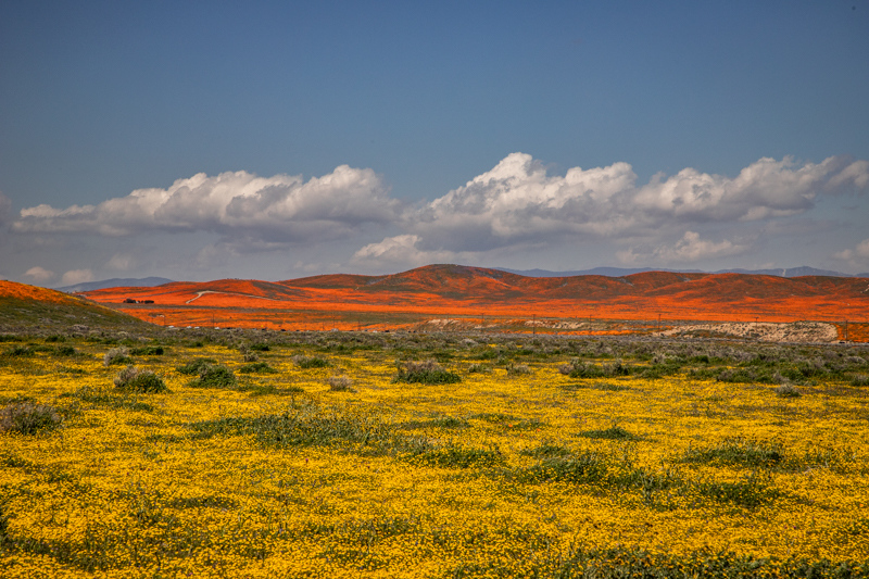 """April 2 - """"Superbloom"""" of poppies and wildflowers, near Lancaster, California.jpg"""