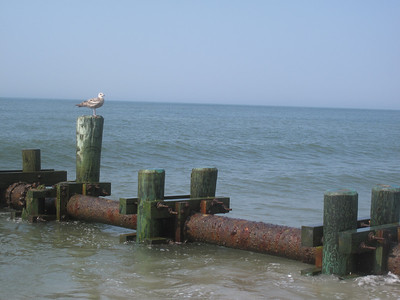 Cape May 2012