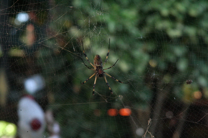 Giant spiders keep the guests free of bugs