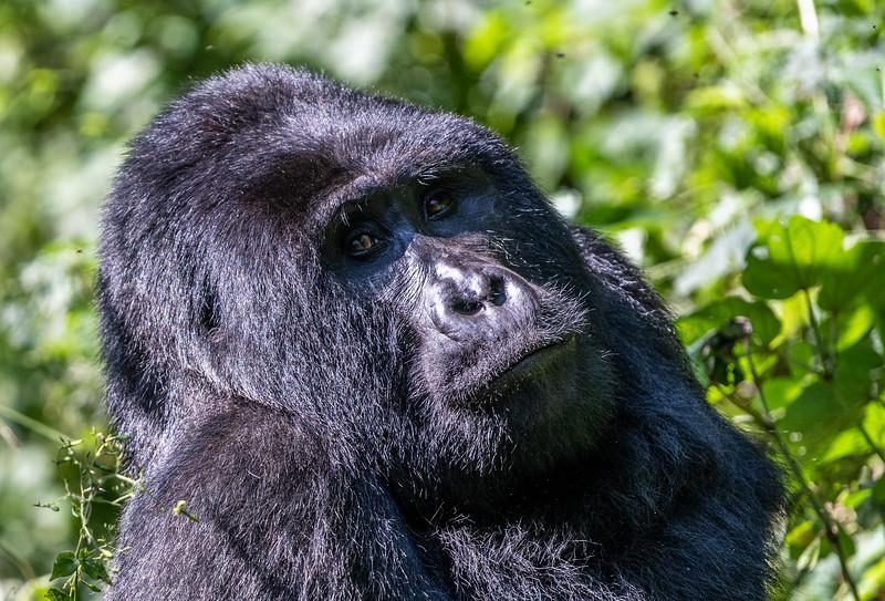 Uganda_T_Gor-712.jpg