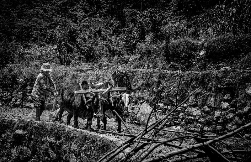 CB-Nepal14-362.jpg