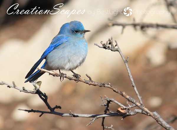 Birds in God's Creation