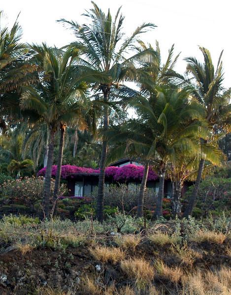 20080416- Hawaii 21- Weds Morning Road Trip DSC_3519-12.jpg