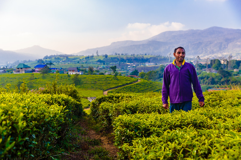 Exploring Nuwara Eliya Tea Fields