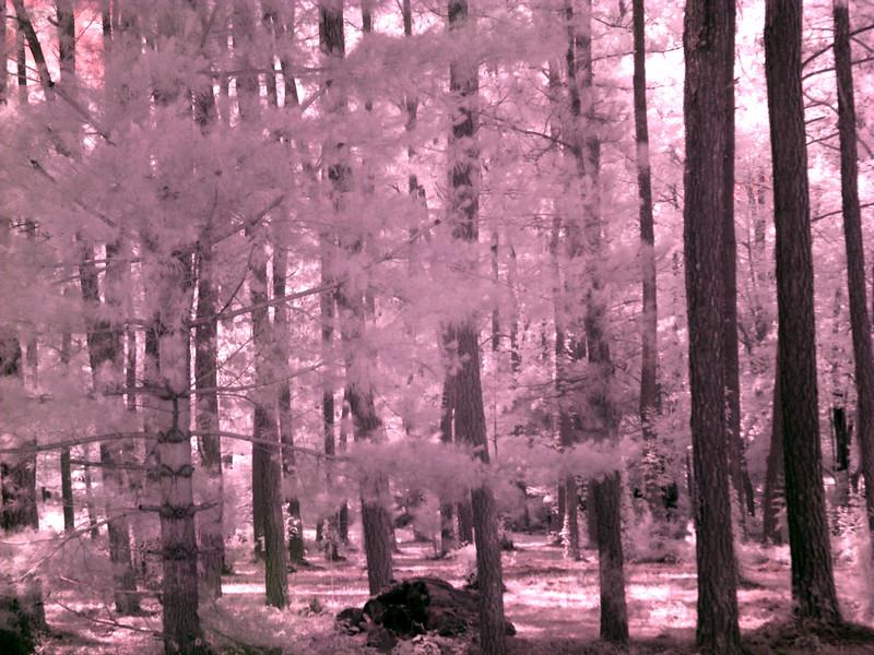 Virginia Trip 2006 - Pine Grove 05 IR From Road (bk & wh pt set