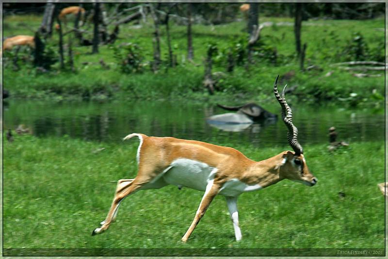 153_PalmBeach_LionCountry_July2005.jpg