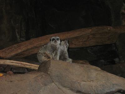 2008 Omaha Zoo