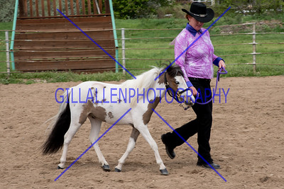 Colorado Pinto Horse Association (CoPtHA)