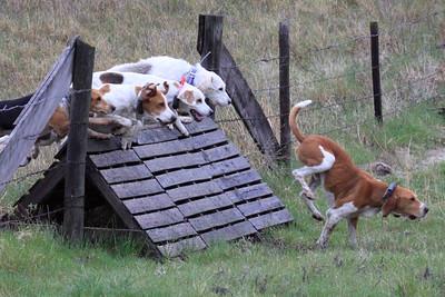North Hills Hunt / Burwell 4-14-2012