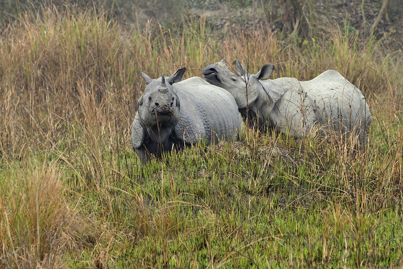 Rhinos-mother-and-child.jpg