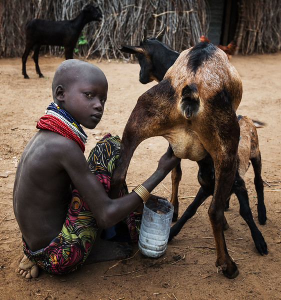 A young Nyangatom girl milking a goat in a small village in the Omo Valley.  Ethiopia, 2017