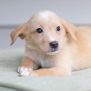 Puppies 10-28-18