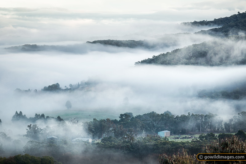 Farms in the Mist