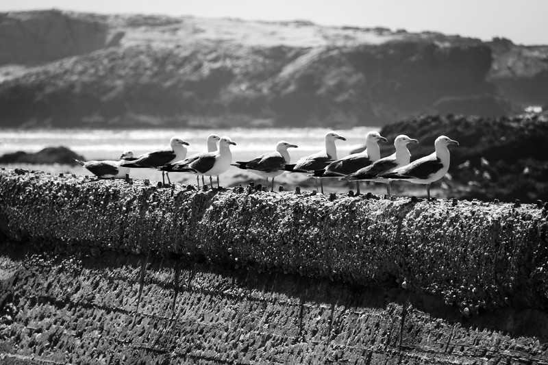 Seagulls on the Wall
