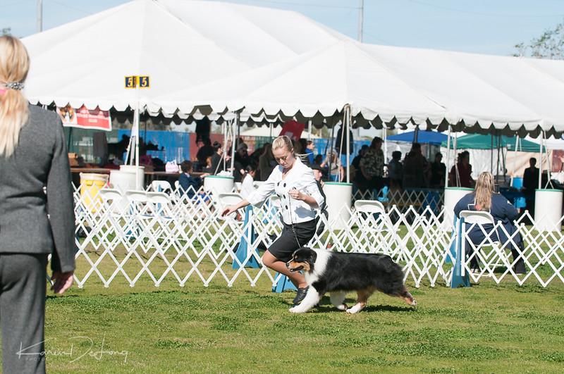 20170205_Australian Shepherds_Lost Dutchman Kennel Club-6.jpg