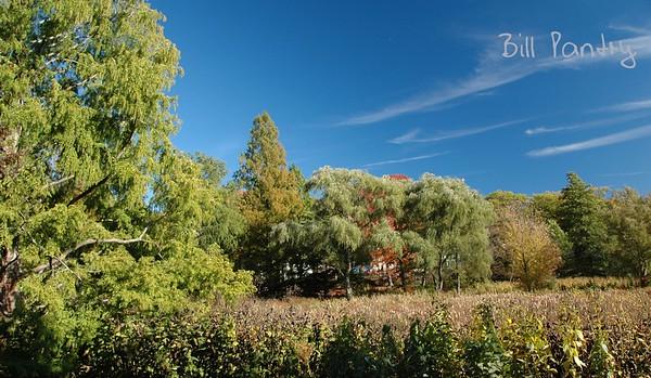 Arnold Arboretum, Jamaica Plain, Boston