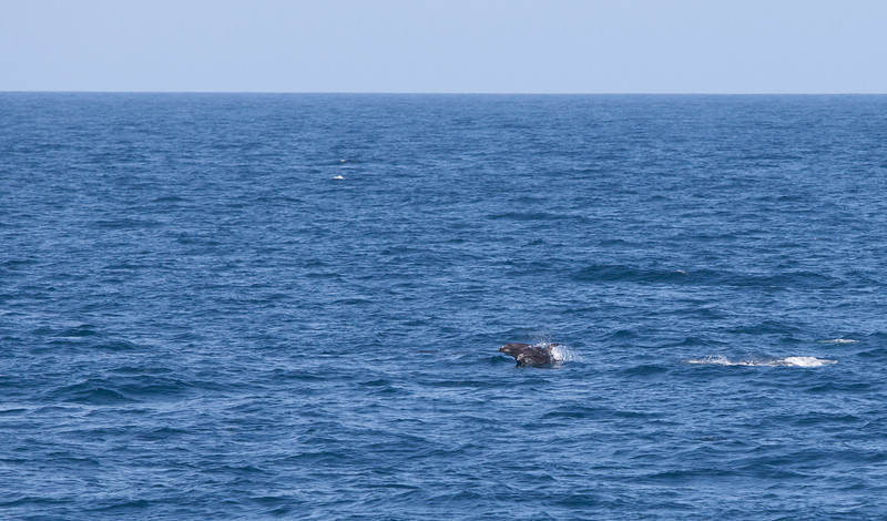 Dolphins heading our way.