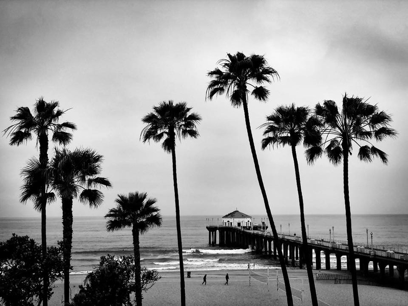 A black and white rendition of the Manhattan Beach Pier and the palm trees that adorn it