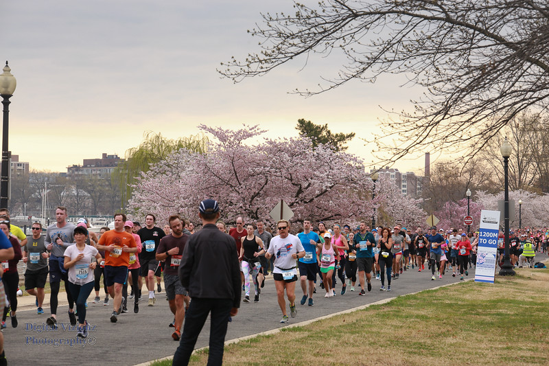 DC Cherry Blossoms 2019 048.jpg